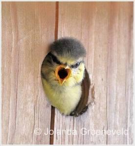 babyvogeltje